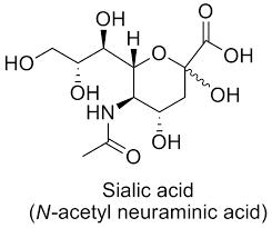 اسید سیالیک